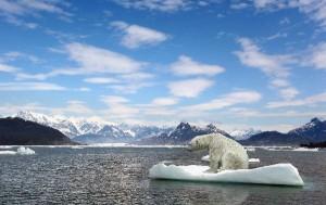 habitat oso polar