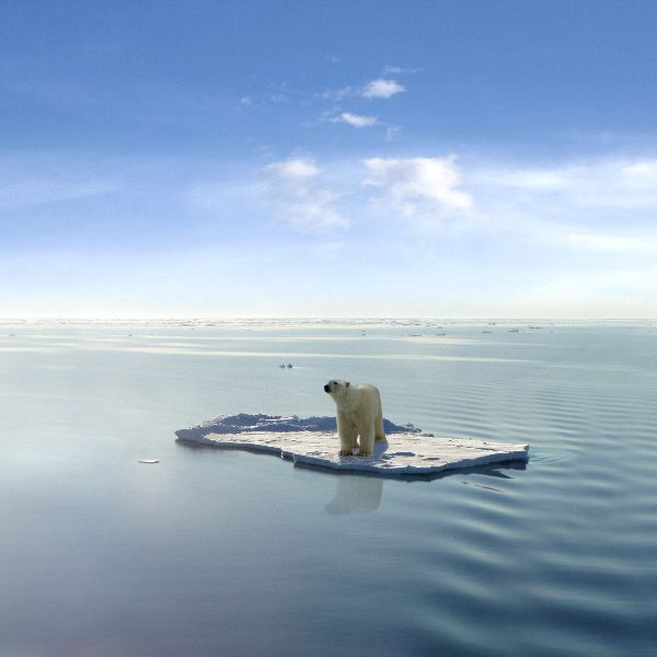 oso polar iceberg