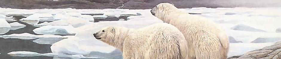 Osos polares en peligro de extinción » OSOPOLARPEDIA