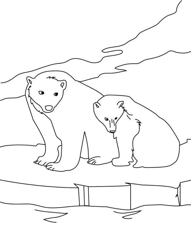 dibujo osos polares en el hielo
