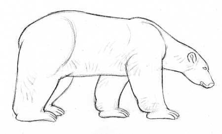 Cmo dibujar fcilmente osos polares  OSOPOLARPEDIA